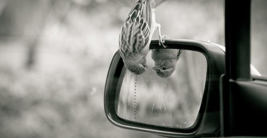 self-reflection2